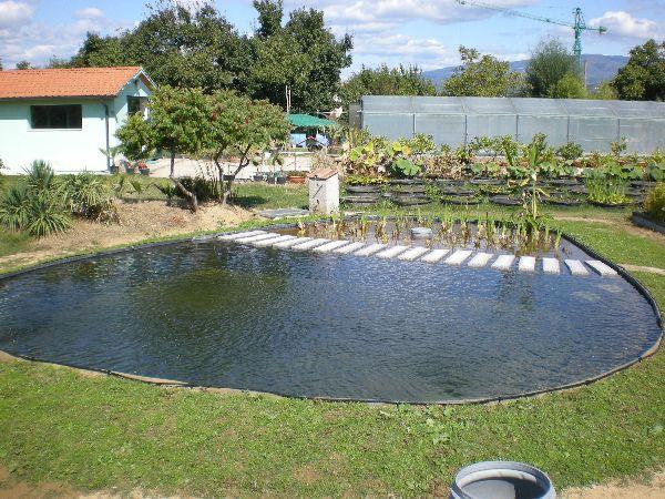 Ninfeebarbagli produzione e vendita piante acquatiche da for Laghetto balneabile progetto