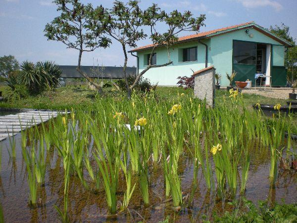 Piante Acquatiche Vendita : Vendita piante acquatiche ninfeebarbagli produzione e
